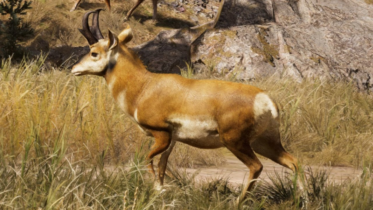 Far Cry 5 Pronghorn Location Where To Hunt The Pronghorn Far Cry 5 Gamerevolution