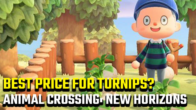 What is the best price for turnips in Animal Crossing: New Horizons?