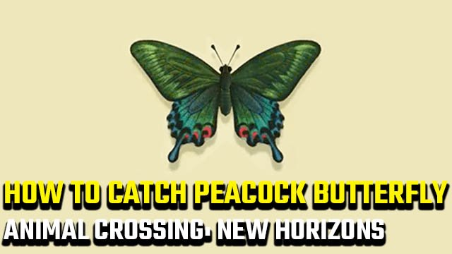 how to catch Peacock Butterfly in Animal Crossing: New Horizons