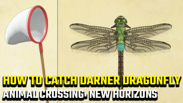 how to catch a Darner Dragonfly in Animal Crossing: New Horizons