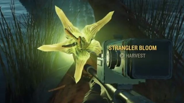 fallout 76 strangler blooms location where to find