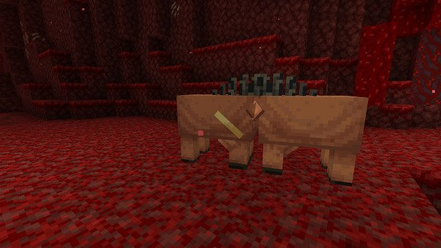 How to tame a Hoglin in Minecraft now kiss